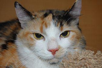 Calico Cat for adoption in Whittier, California - Gigi