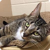 Adopt A Pet :: Kimberly - Cumming, GA