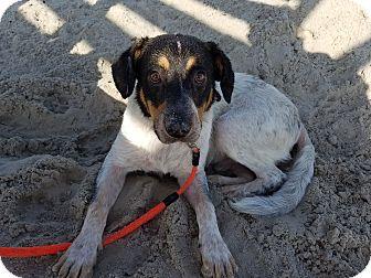 Australian Shepherd Mix Dog for adoption in Cincinnati, Ohio - Titan
