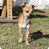 Adopt A Pet :: JETSEN - BROOKSVILLE, FL