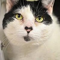 Adopt A Pet :: LITTLE ONE! - Philadelphia, PA
