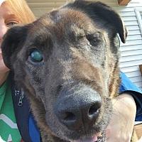 Adopt A Pet :: Doc - Grand Rapids, MI