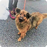 Adopt A Pet :: Lady Bear - Beacon, NY