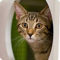 Adopt A Pet :: Simply - Troy, MI