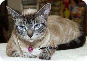 Siamese Cat for adoption in Sacramento, California - Samantha M