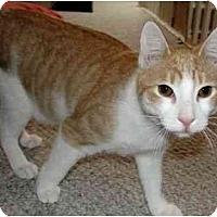 Adopt A Pet :: Grady - Jenkintown, PA