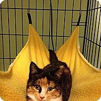 Adopt A Pet :: Peaches - Monroe, GA