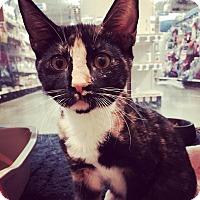 Adopt A Pet :: Buttercup - McDonough, GA