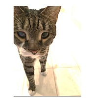 Adopt A Pet :: Fiona - Ortonville, MI