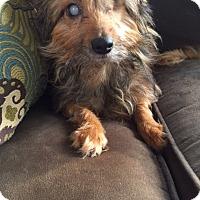 Adopt A Pet :: Kaci - Bunnell, FL