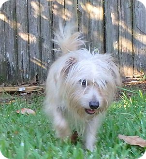 Terrier (Unknown Type, Small) Mix Dog for adoption in Mary Esther, Florida - Anna