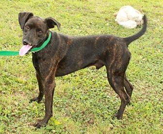 Hound (Unknown Type) Mix Dog for adoption in Norfolk, Virginia - Cliff