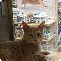 Adopt A Pet :: Harry Furbelow - McDonough, GA
