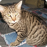 Adopt A Pet :: Cowboy - Buhl, ID