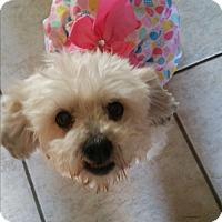 Adopt A Pet :: Lucille - La Verne, CA