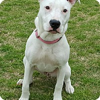 Adopt A Pet :: Mia - Tuttle, OK