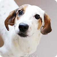 Adopt A Pet :: Deena - Appleton, WI