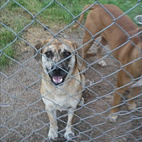 Adopt A Pet :: Dude - Spring, TX