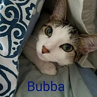 Adopt A Pet :: Bubba-Male- - Knoxville, TN