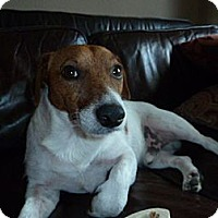 Adopt A Pet :: Aggie in Houston - Houston, TX