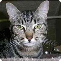 Adopt A Pet :: Louisa - New Port Richey, FL