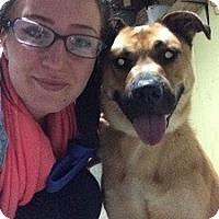 Adopt A Pet :: Georgie - Hamilton, ON