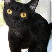 Adopt A Pet :: Kiska - Waupaca, WI