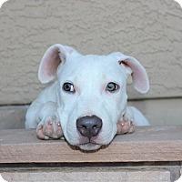 Adopt A Pet :: Tess - Gilbert, AZ