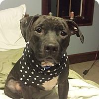 Adopt A Pet :: Bucky - New York, NY