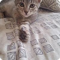 Adopt A Pet :: Jam - Chicago, IL