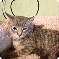 Adopt A Pet :: Parker - Bridgeton, MO