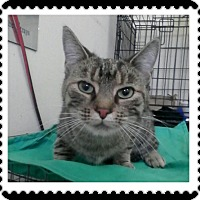 Adopt A Pet :: Chai - Trevose, PA