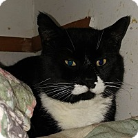 Adopt A Pet :: Rico Suave - Middletown, NY