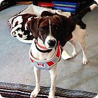 Adopt A Pet :: Taylor - Hamilton, ON