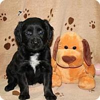 Adopt A Pet :: Katrina - Norfolk, VA