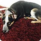 Adopt A Pet :: Coco 3 (COURTESY POST)