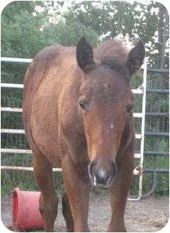 Quarterhorse Mix for adoption in Dewey, Illinois - Twiggy