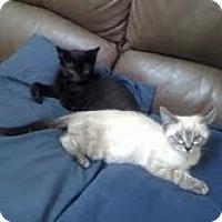 Adopt A Pet :: Tawny & Coal - Arlington, VA