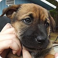 Adopt A Pet :: Bianca - Danbury, CT