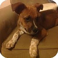 Adopt A Pet :: Riggs - Modesto, CA