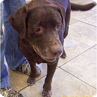 Adopt A Pet :: Junior - Altmonte Springs, FL