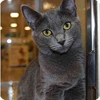 Adopt A Pet :: Leni - Modesto, CA