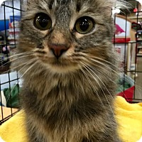 Adopt A Pet :: Clarke - McDonough, GA