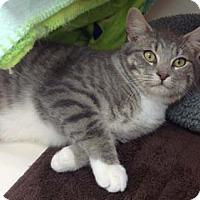 Adopt A Pet :: Vincent - Merrifield, VA