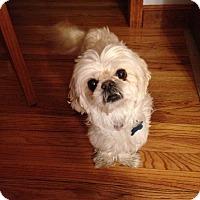Adopt A Pet :: Maddie - Grafton, MA