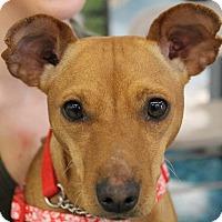 Adopt A Pet :: Kiya - North Olmsted, OH