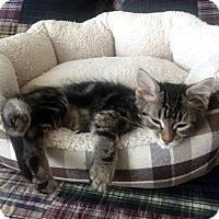 Adopt A Pet :: Chewy - Nolensville, TN