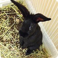 Adopt A Pet :: Onyx - Moneta, VA