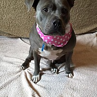 Adopt A Pet :: Gracie - Centerburg, OH