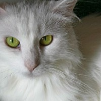 Adopt A Pet :: Este - Ephrata, PA